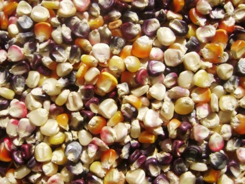 Granos multicolores