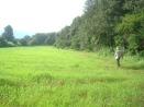 Campos de Trigo Libre