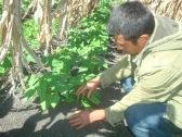 Salomón mostrando calidad de suelo