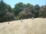 Cortando trigo fondoárboles