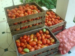 Lllegaron los Tomates 29 de Junio 2013