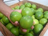 Limones de Yucatán