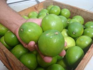 Limoes persas Bernard