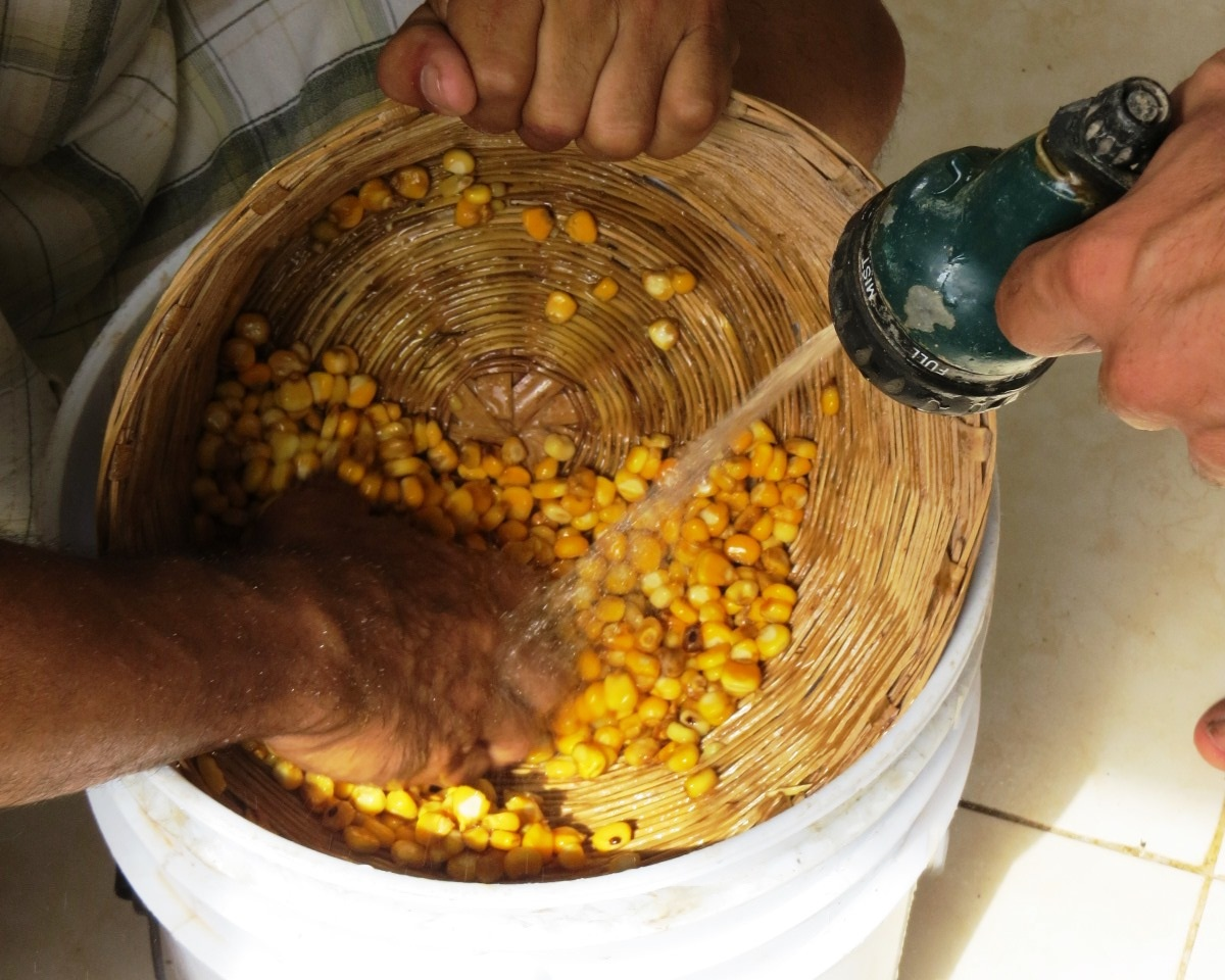 Receta Casera Para Elaborar Masa De Nixtamal Mexico Tierra Viva Compras Comunitarias De Productos De Agricultura Ecologica A Campesinos Que Cuidan La Tierra