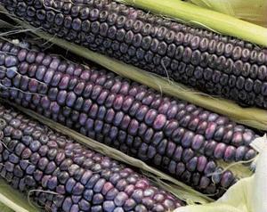 Maiz azul 1