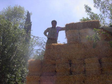 Tomaíz pacas de trigo