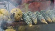 elotes-azules-2