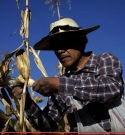 Foto Tomaiz cosechando